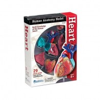 Learning Resources Human Anatomy - Heart